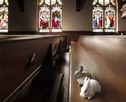 bunnies in church
